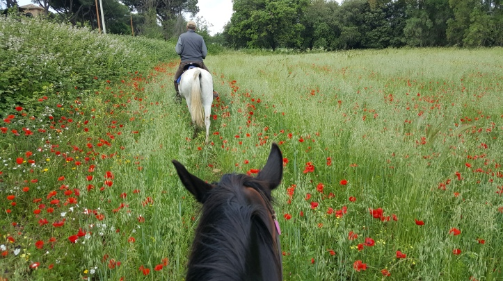 Appian Park on Horseback in Rome with Field of Poppies